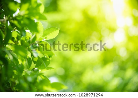 Closeup nature view of green leaf on blurred greenery background in garden with copy space using as background natural green plants landscape, ecology, fresh wallpaper concept. #1028971294