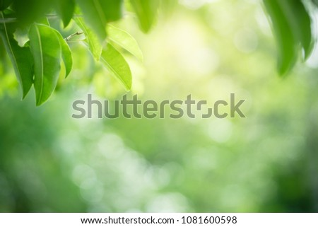 Closeup nature view of green leaf on blurred greenery background in garden with copy space using as background natural green plants landscape, ecology, fresh wallpaper concept. #1081600598