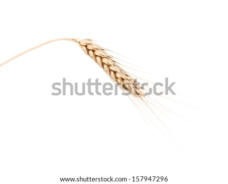 Closeup of a barley ear over a white background