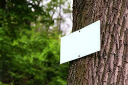 Closeup of a blank white sign board (table) attached by two rusty metal nails to the spruce tree with rough bark. Free space for your text or design to copy. Bark texture,green trees in the background