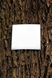 Closeup of a blank white sign table / board attached by four silver metal nails to the spruce tree with rough bark. Free space for your text or design to copy there. Bark texture in the background.
