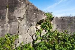 Closeup of a broken reinforced concrete wall of a bunker in Netherlands overgrown with climbing plants on a sunny day in autumn.