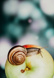 closeup of a brown snail crawling over a ripe green apple. snail on a bright blurred background. still life in the summer garden with a snail and an apple. still life with fruits and insects