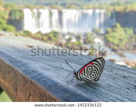 Closeup of a butterfly with the Iguacu Falls in the background. It is known as Butterfly 88 because of the number 88 that can be seen in the wings pattern.  Original butterfly from South America.