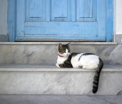 closeup of a cat lying on a step in front of a  blue door entrance in paros greece