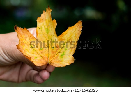 closeup of a caucasian man with a dry leaf in his hand