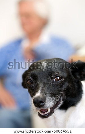 Closeup of a dog with an elderly woman out of focus in the background.