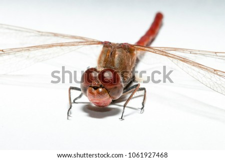 Closeup of a dragonfly on a white background Imagine de stoc ©