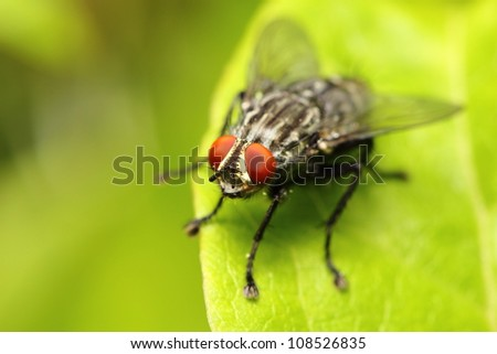 closeup of a fly #108526835