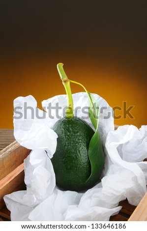 Closeup of a fresh picked avocado with stem and leaf in a wood packing crate. Vertical format with a light to dark warm background.