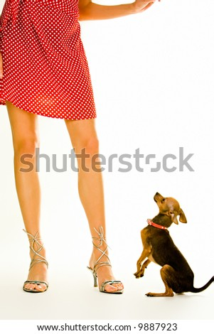 Closeup of a girl's legs standing with a small dog near by