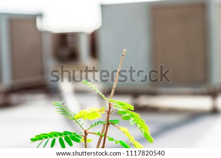 closeup of a green and growing plant on the roof top and heavy duty AC units kept in the background  #1117820540