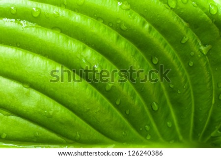 Closeup of a green leaf. Nice to use as background.