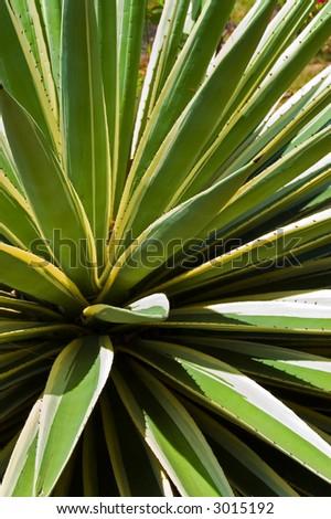 closeup of a green plant
