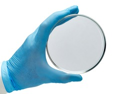 Closeup of a hand in a blue glove holding a glass petri dish. Used in microbiology and chemistry.