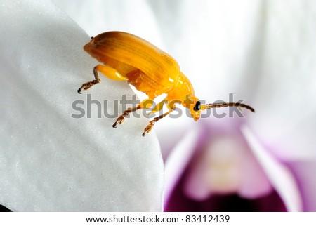 Closeup of a ladybug on a leaf