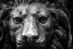 Closeup of a lion's head carving and sculpture in bronze alloy steel metal with details of eyes and mane in strong material