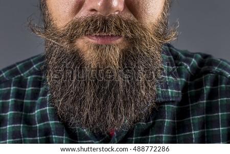 Closeup of a man beard and mustache over gray background.Perfect beard