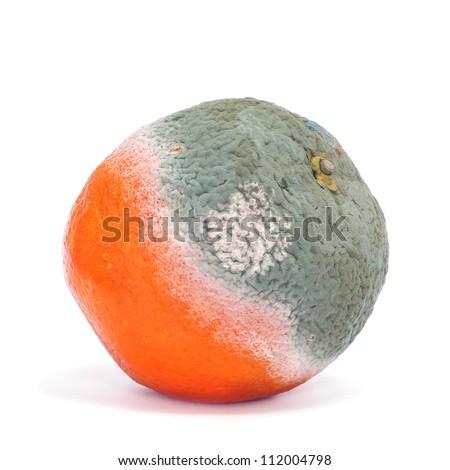 closeup of a moldy orange on a white background