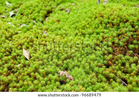 closeup of a moss in forest, green background