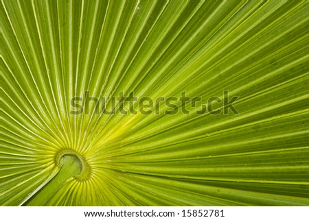 Closeup of a palm leaf pattern in the Riviera Maya area of Mexico