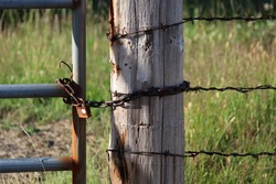 Closeup of a rusty chain and padlock securing a welded tube-steel gate to a stout wooden post. Three strands of barb wire encircle the post and disappear off to the right. Green grass is seen beyond.