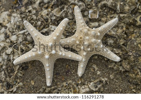 Closeup of a seashell on a sandy beach