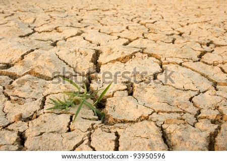 closeup of a small plant growing from arid land
