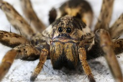 closeup of a Spider macro wildlife background