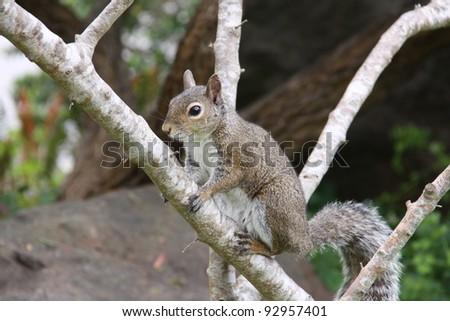 closeup of a squirrel