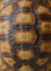 Closeup of a turtle shell.