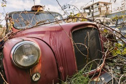 Closeup of an old abandoned rusty cab engulfed by nature.