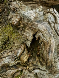 Closeup of an old treetrunk.