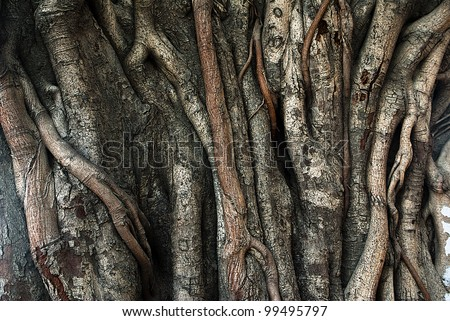 Closeup of banyan tree trunk roots with carvings.