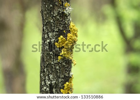 Closeup of bark of tree trunk with yellow fungus