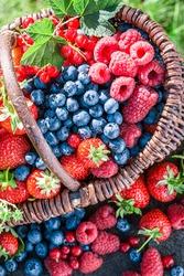 Closeup of basket full of berry fruits in garden