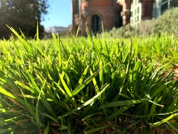Closeup of beautiful green lawn of grass with out of focus buildings in the background
