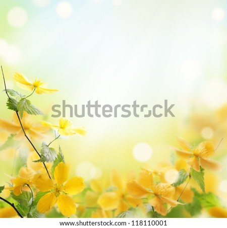 Closeup of beautiful yellow flowers in the garden