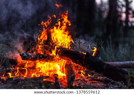 Closeup of blazing campfire in the evening #1378559612