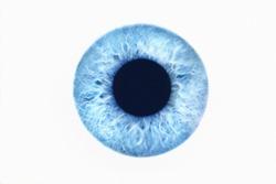 Closeup of blue eye on white background