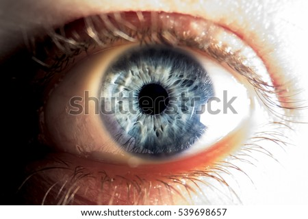 closeup of blue human eye