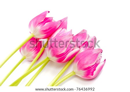 Closeup of bouquet of pink tulips without leafs isolated on white