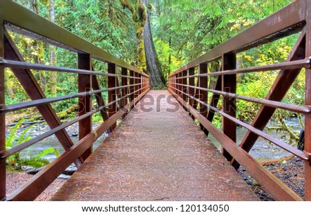 Closeup of bridge in rainforest, crossing a small creek / river