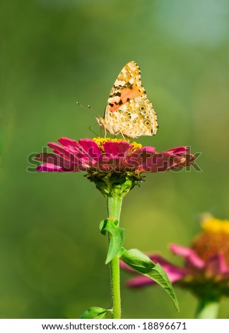 closeup of butterfly and pink flower. blurred background. shallow dof