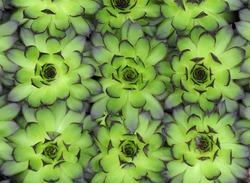 closeup of  cactus