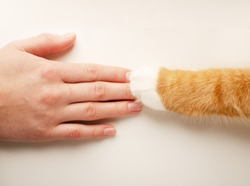 Closeup of cat paw in the human hand on a whte background