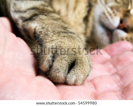 Closeup of cat paw in the man hand.