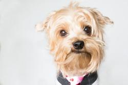 Closeup of checky dog face