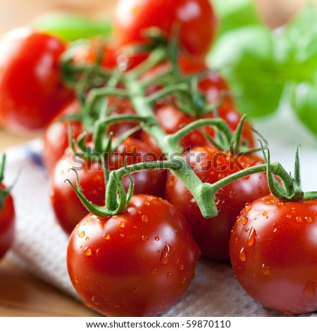 Closeup of cherry tomatoes on the vine
