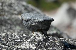 Closeup of Chicken Head Climbing Hold